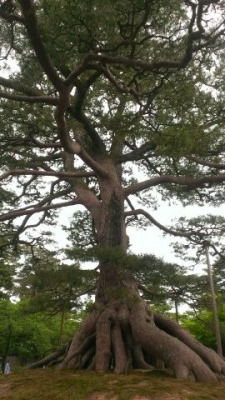 木に足がいっぱいはえてます
