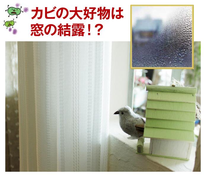 カビの大好物は窓の結露!?